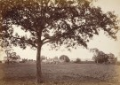 monuments at Dacca (Dhaka) taken in the 1880s